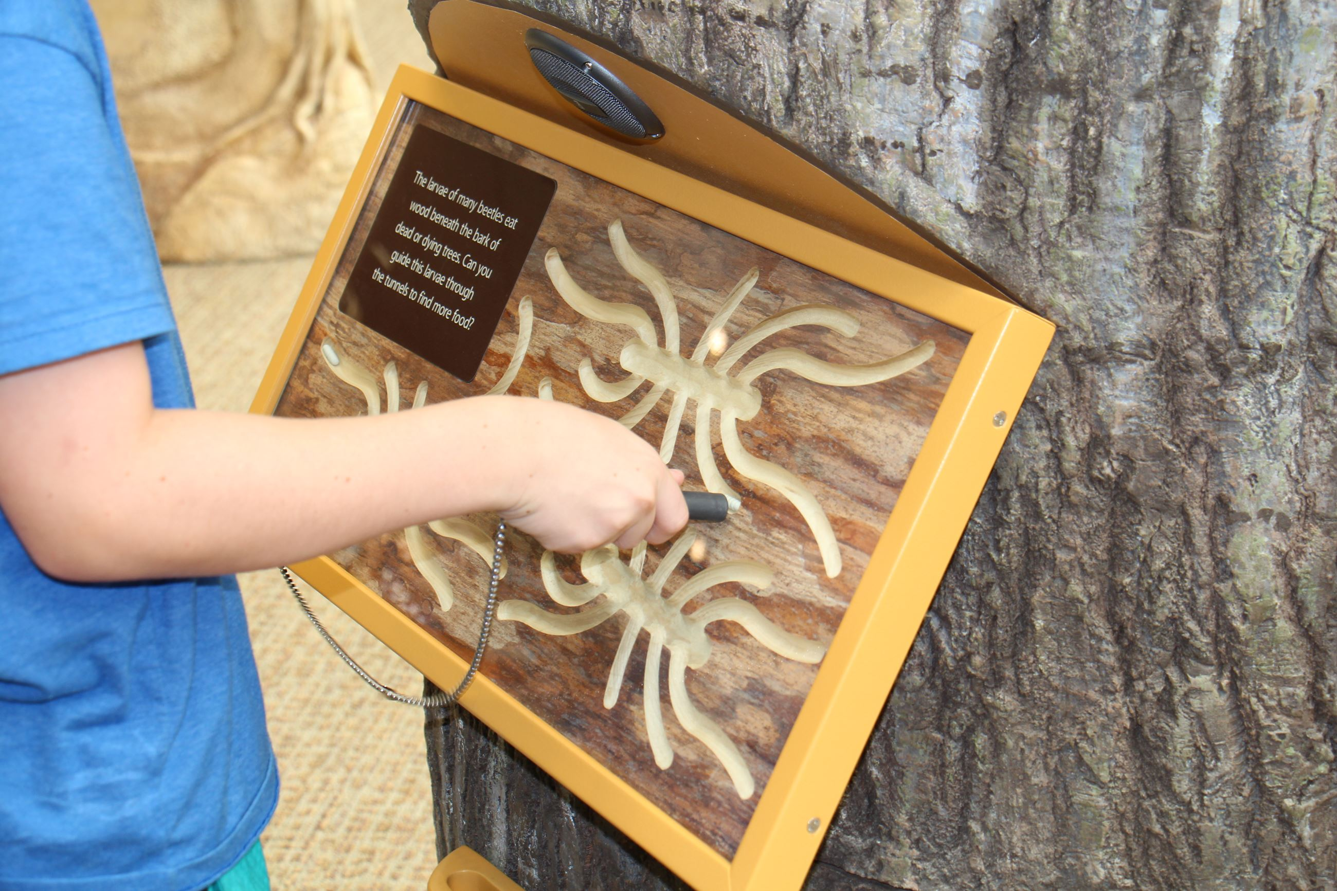 Child Playing on Tree Exhibit